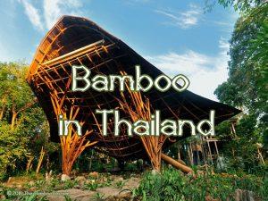 Bamboo in Asia