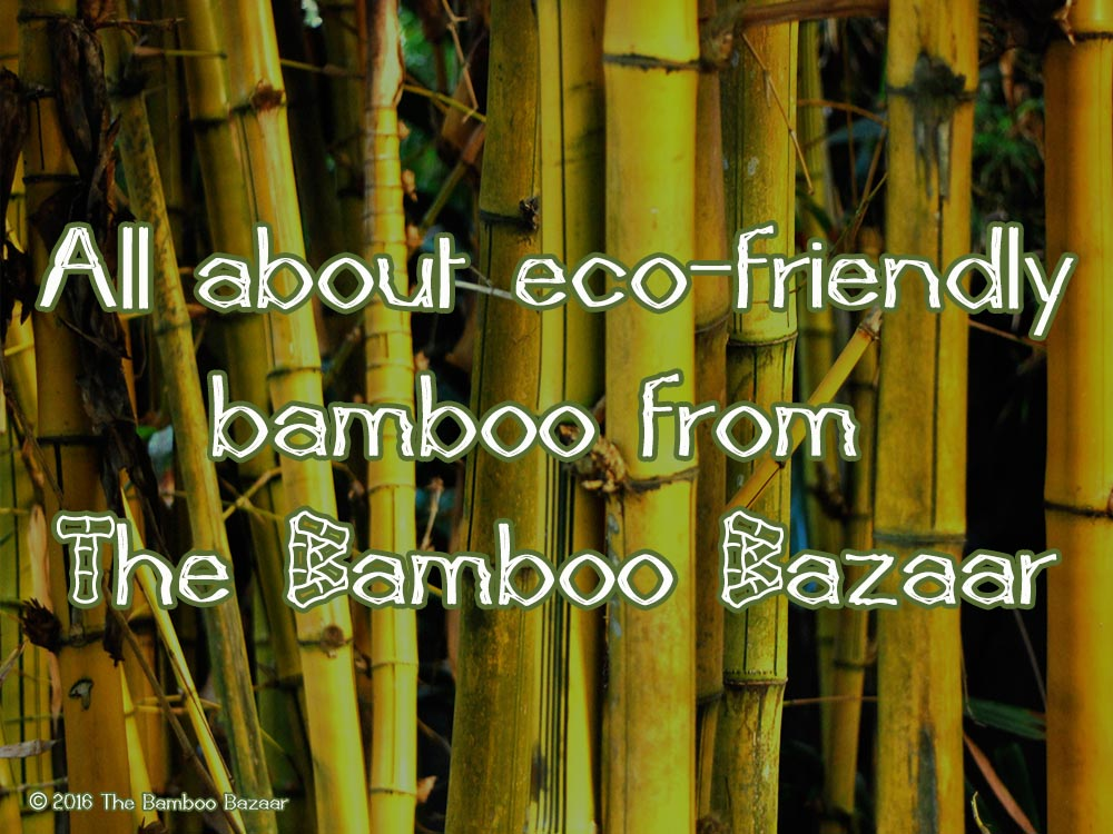 The Bamboo Bazaar - All about eco-friendly bamboo
