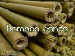 The Bamboo Bazaar - bamboo canes