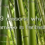 9 reasons why bamboo is fantastic