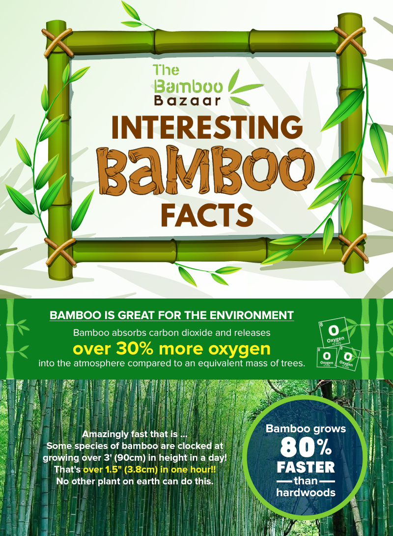 bamboo eco-friendly facts