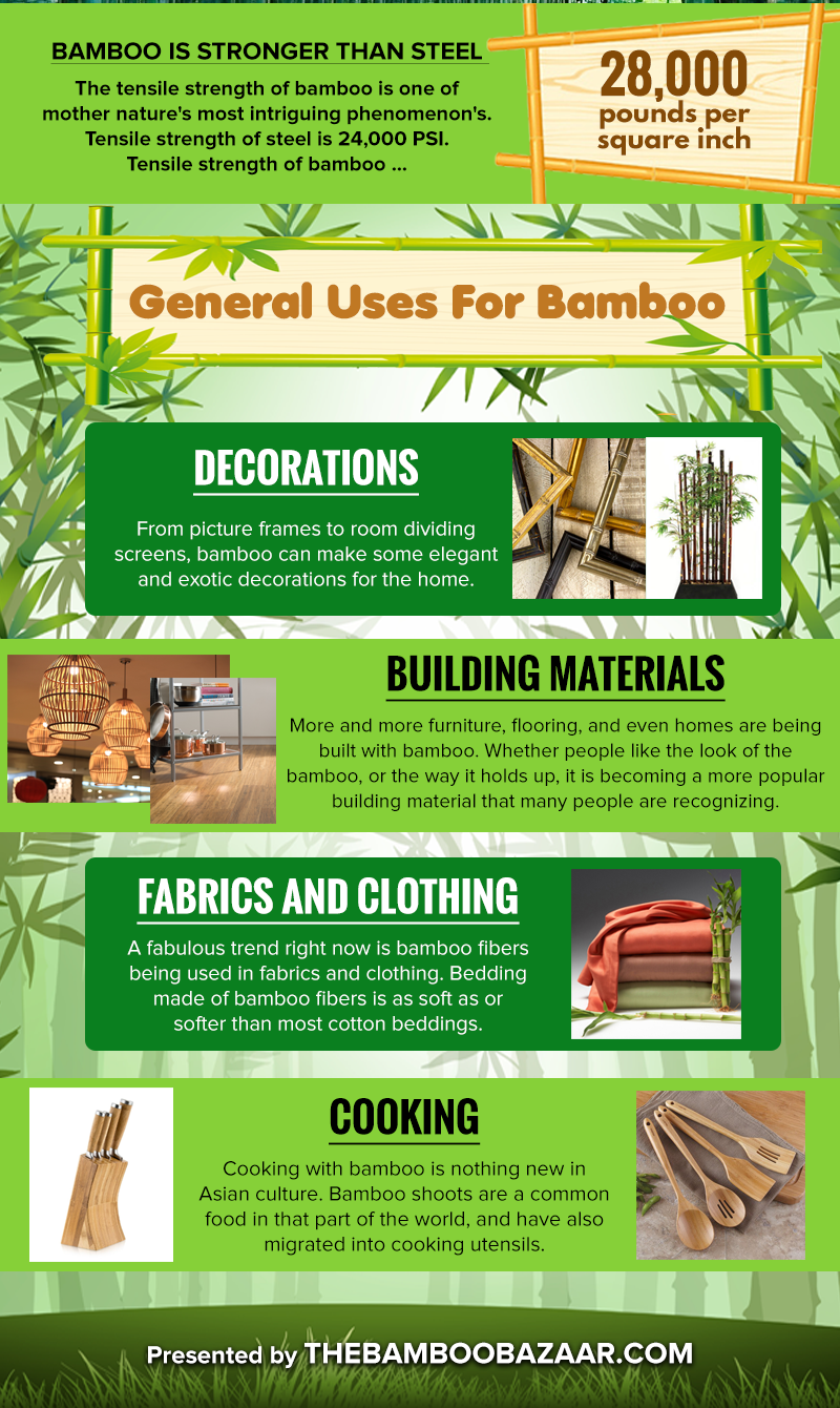 Interesting Bamboo Facts For The Curious Mind Infographic