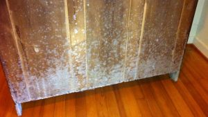 mold on bamboo