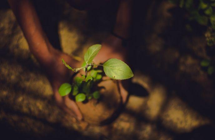 Planting shade trees